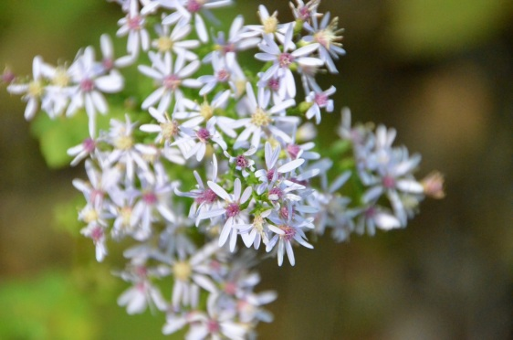 white-and-purple-flowers